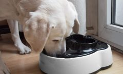 Diez comederos automáticos para mascotas