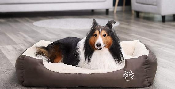 Resultat d'imatges de cama perro