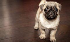 Los transportines de perro más baratos