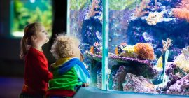 Los acuarios más vendidos