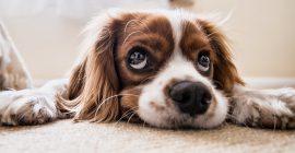 Las mejores correas para perros