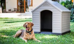 Las casas para perros más vendidas