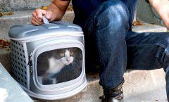 Los mejores transportines para gato
