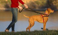 Los mejores arneses para perros