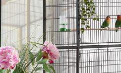 Las mejores jaulas para pájaros