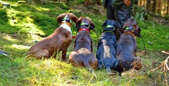 Los mejores GPS para perros