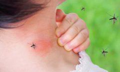 Los mejores mata mosquitos para acabar con ellos