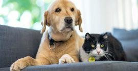 Consejos para cuidar a tu mascota en verano