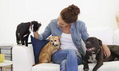 Aprovecha las últimas rebajas del verano para tu mascota